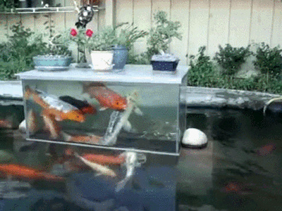 It's for the koi to see humans