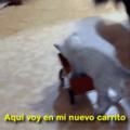 Gatito :3