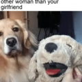 Jealous doggo