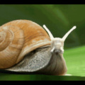 Snails will be the next dominant species after humans die