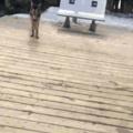 Doggo loves playing fetch