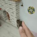 Pussy slayer