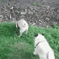 Doggo is mine