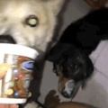 Dogge got face full of yogurt