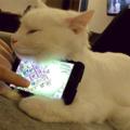 El Gato que sostiene tu teléfono :v