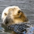 Trying to wake up in the morning (he otter go to bed earlier)