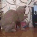 Cat vs. Subwoofer