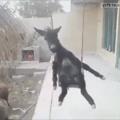 mas eh um burro mesmo
