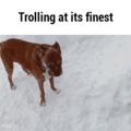 Pupper troll