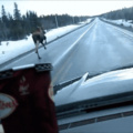 The glorious highway moose
