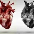 Así es un corazón real