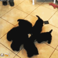 new and offical dog fidget spinner