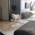 not so smart doggo