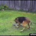 Pto perro xD