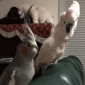 Rejection hurts no matter who you are or what you are (poor birb)