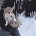 Doggo can into snow