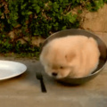 Round doggo
