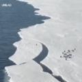 Pingüim se salva nos 45 do segundo tempo