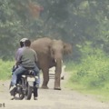 Elephants always have the right of way.