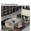does whatever a spider can...