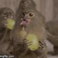 Grape apes