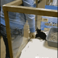 Queria ter um gato assim e vcs?