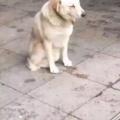 """dog tired"""