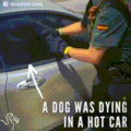 doggo being saved