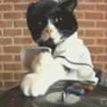 MC pussycat