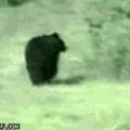 TEAMCAT POWER ! Nous vaincrons même les ours