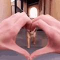 cute doggo if u dont vote 4 dis dat means u no like doggo