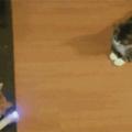 I wanna play Cat Lazer Pong