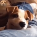 doggie smiles