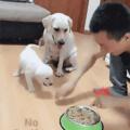 Título é cachorro