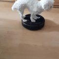 Dog plus roomba. Sorry for the bad quality.