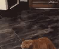 Lé chat