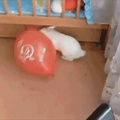 Quando você nasce um coelho doidão e estoura um bola com uma xoxota dentro, mas vc curte desenhos chineses