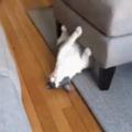 Hyper Cat.