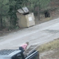 Bearly escaped