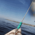 shark photobombs