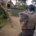what are the koalafications for her job?
