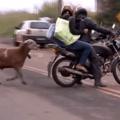 Fucking motos
