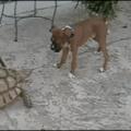 Teenage Mutant Ninja Turtle VS Doggo
