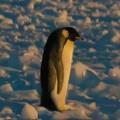 Penguin trip