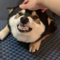 don't worry he is just smiling at you cuz he likes you