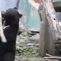 Assistiu muito Kung fu Panda