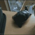 Bird Squeezer, you're needed.