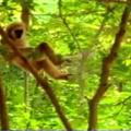 Felinos sendo vítimas de macacos na bunda e agora os otacufurrybronys farão cosplay de onça