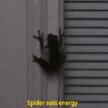 ...... Quando a aranha da vizinha come aquela lâmpada fluorescente e se fode pentaloucamente ao ter a lâmpada acesa dentro de seu intestino. E depois descobrem que a aranha era otacu e engoliu pela cloaca
