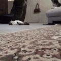 cito il gatto sullo sfondo... È abbastanza confuso...